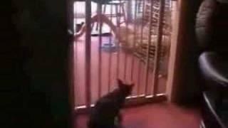best cat jump ever